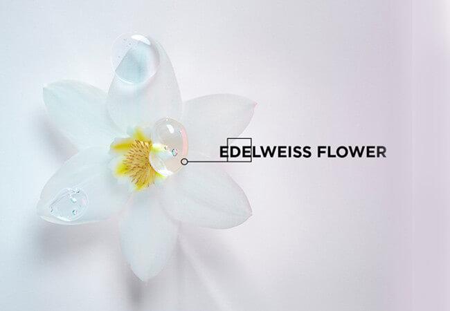 media/image/Edelweiss-FLower326I2uXiXSMFx.jpg