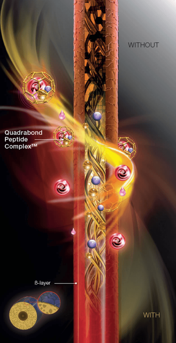 Quadrabond Peptide Complex