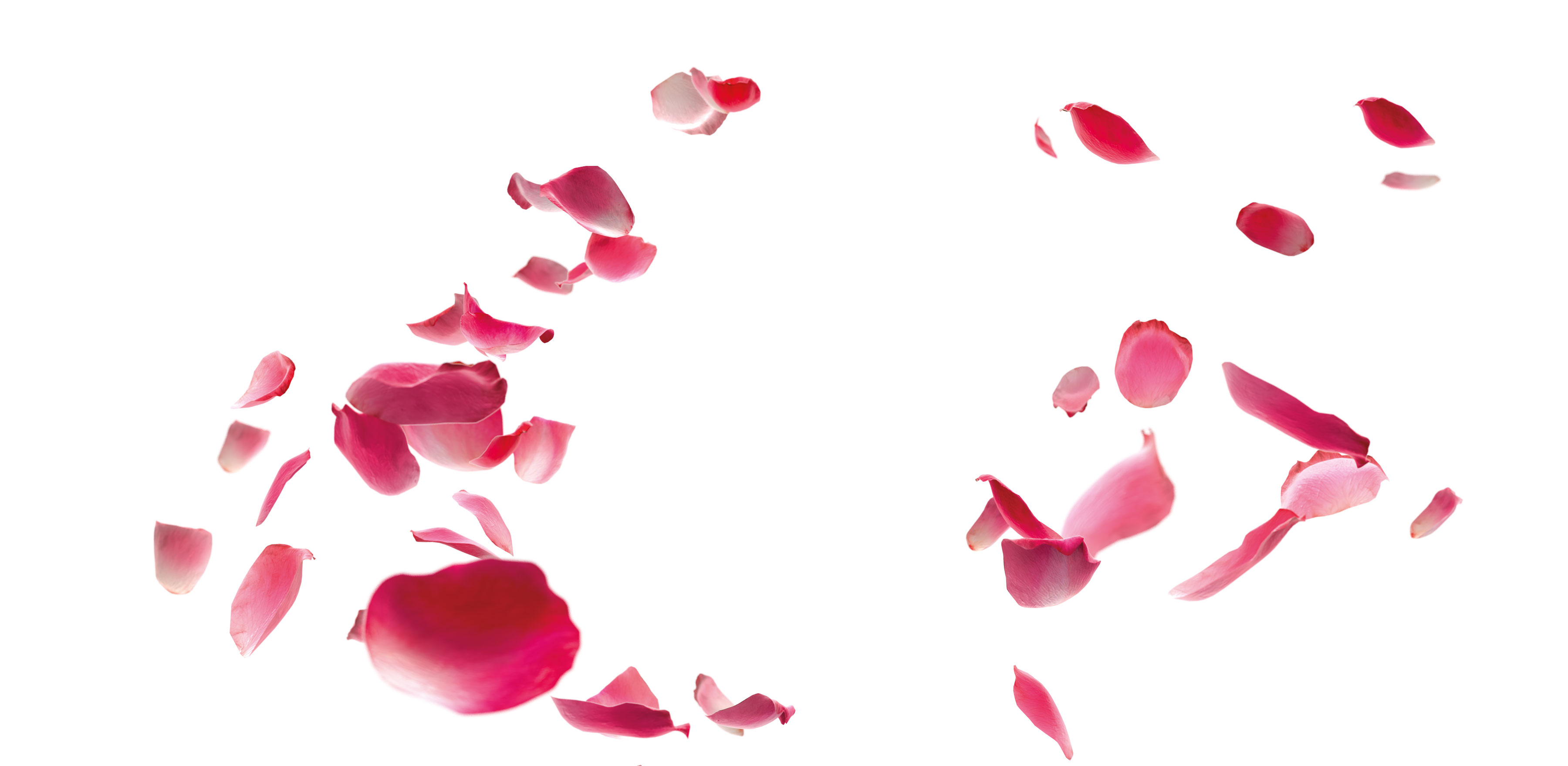 Rosenbl-tter-pink