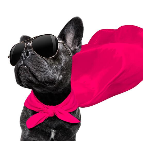 media/image/clickandcare-dog.jpg